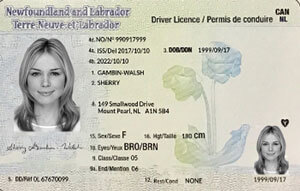 NL driver's licence